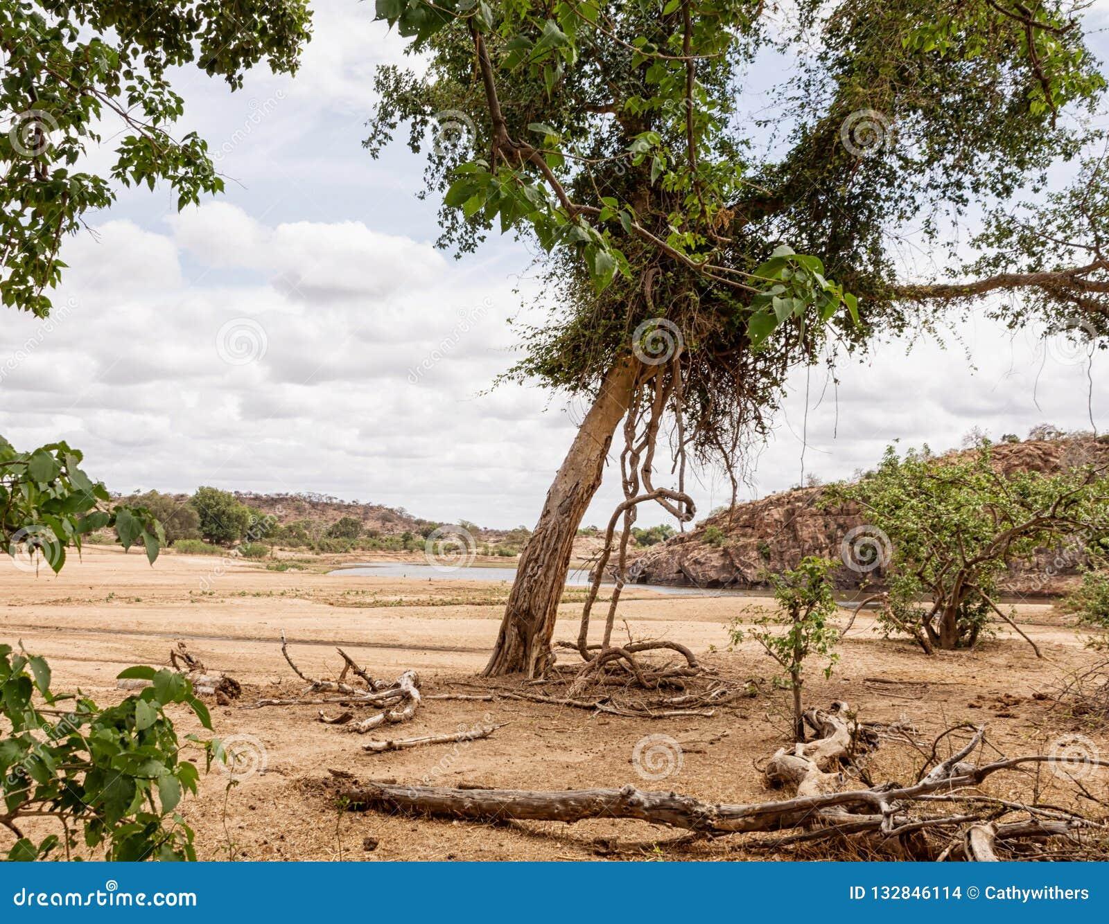 Cauce del río del Limpopo
