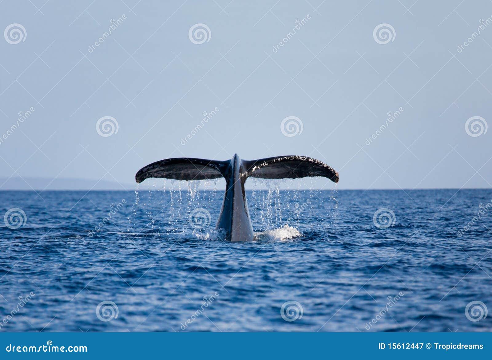 Cauda da baleia