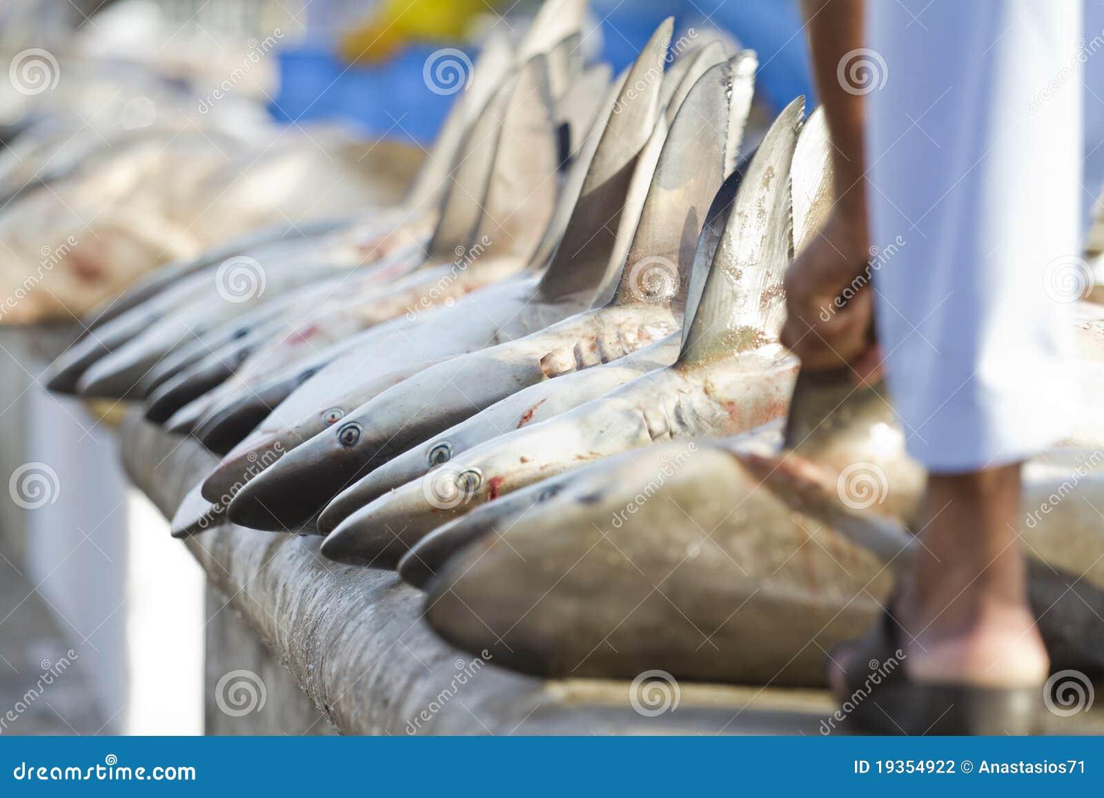 Caudas dos tubarões em um mercado de peixes, Dubai, UAE