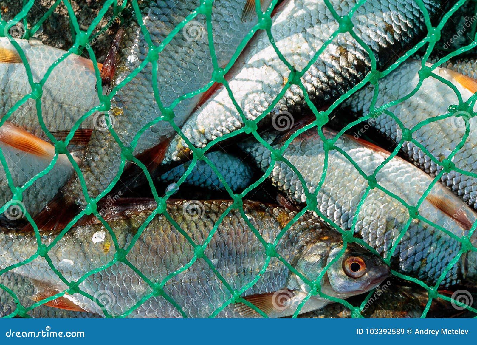 plenty of fish is it free