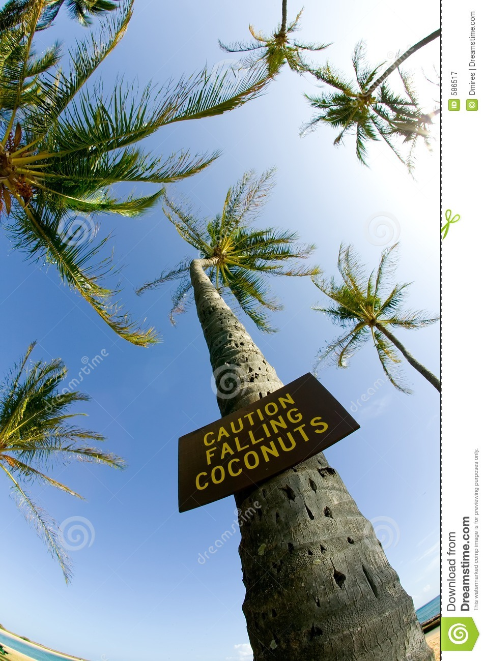 Caution Falling Coconuts Royalty Free Stock Photography