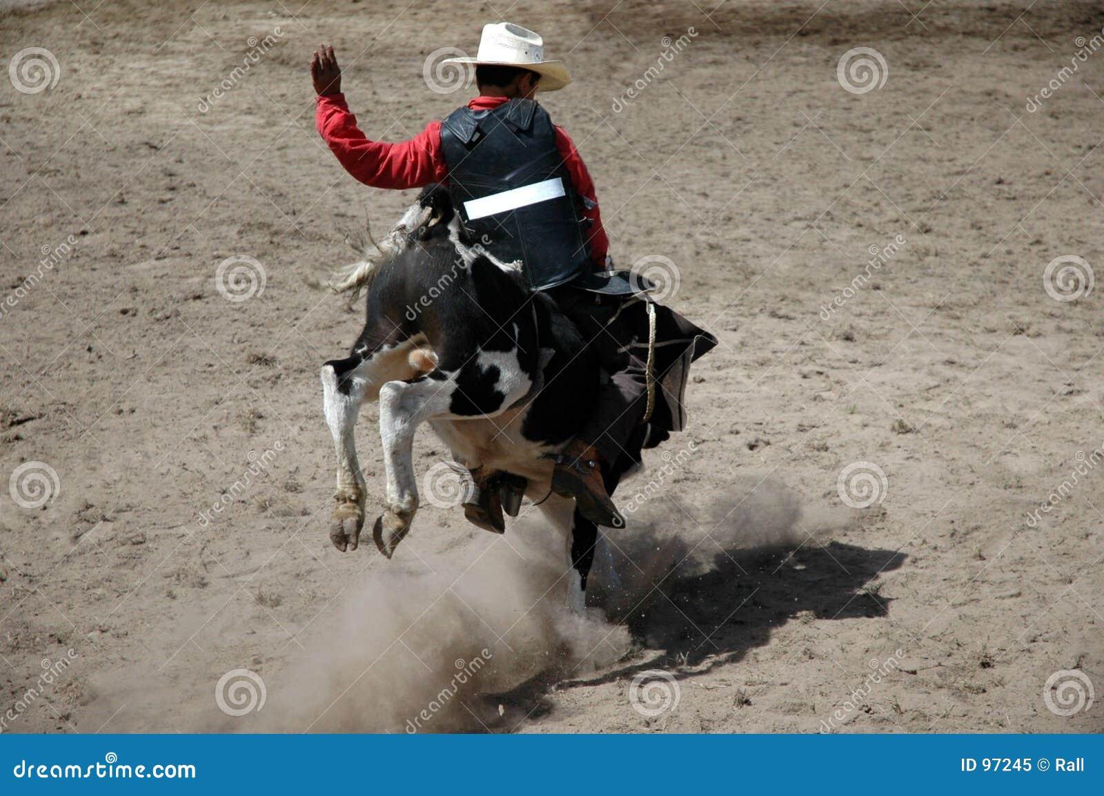 Cavaleiro da vitela