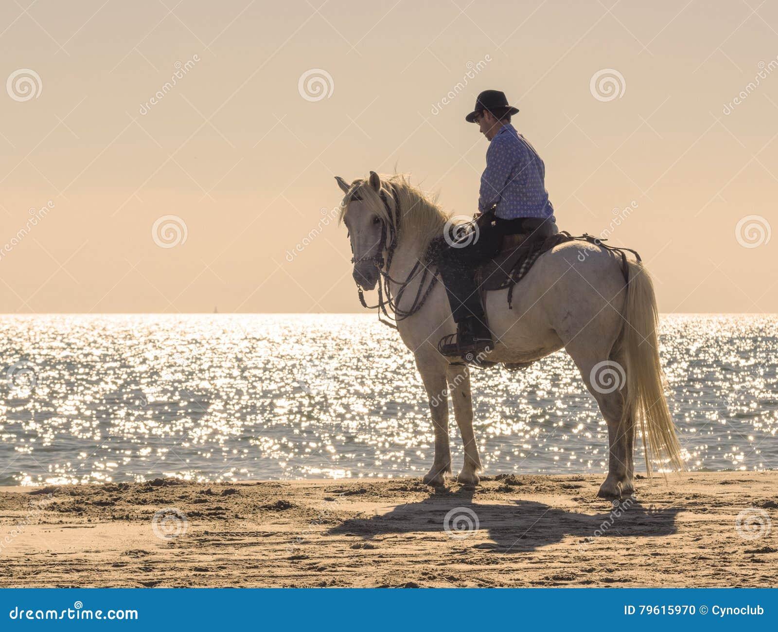 Cavaleiro do cavalo na praia