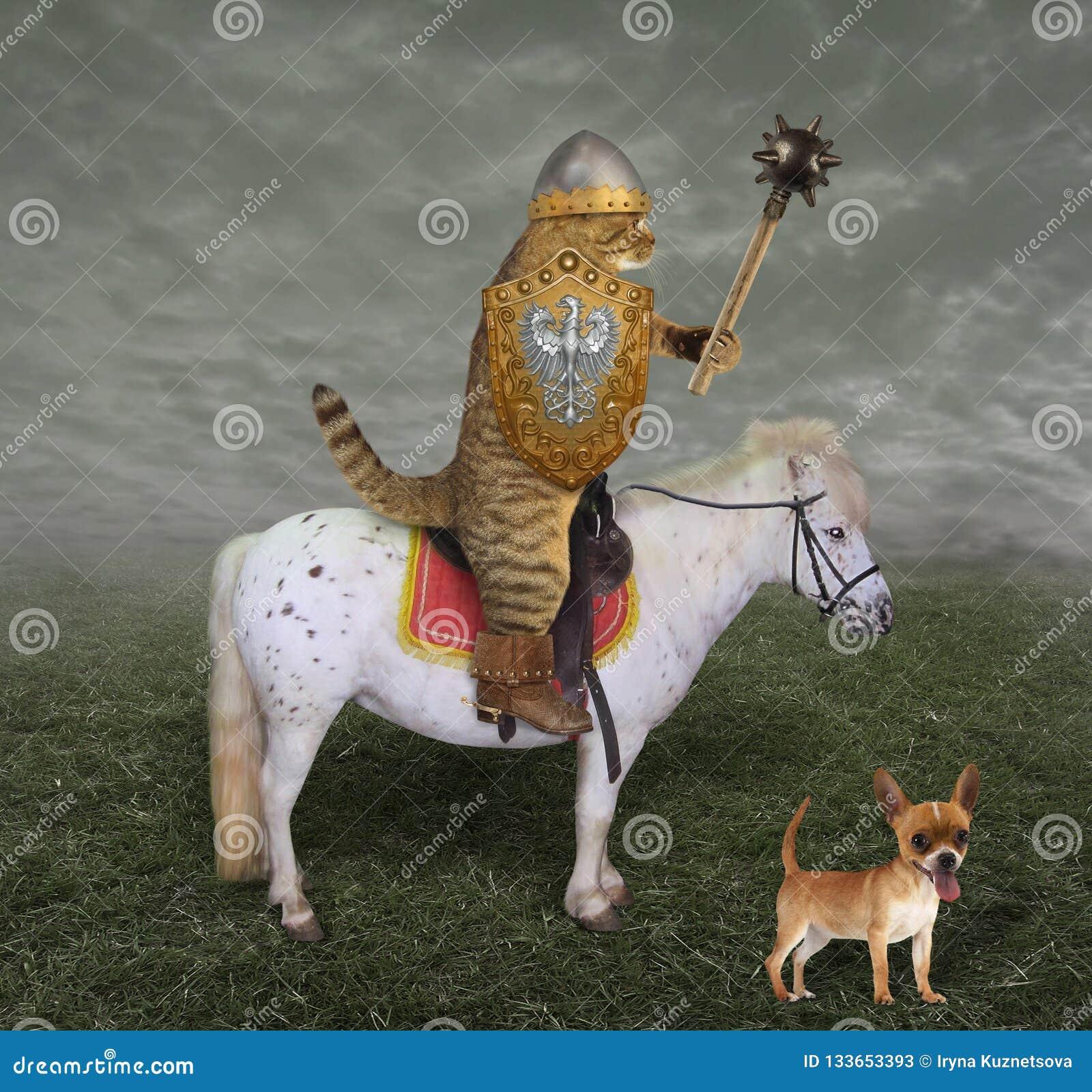Cavaleiro do gato em um cavalo com uns macis