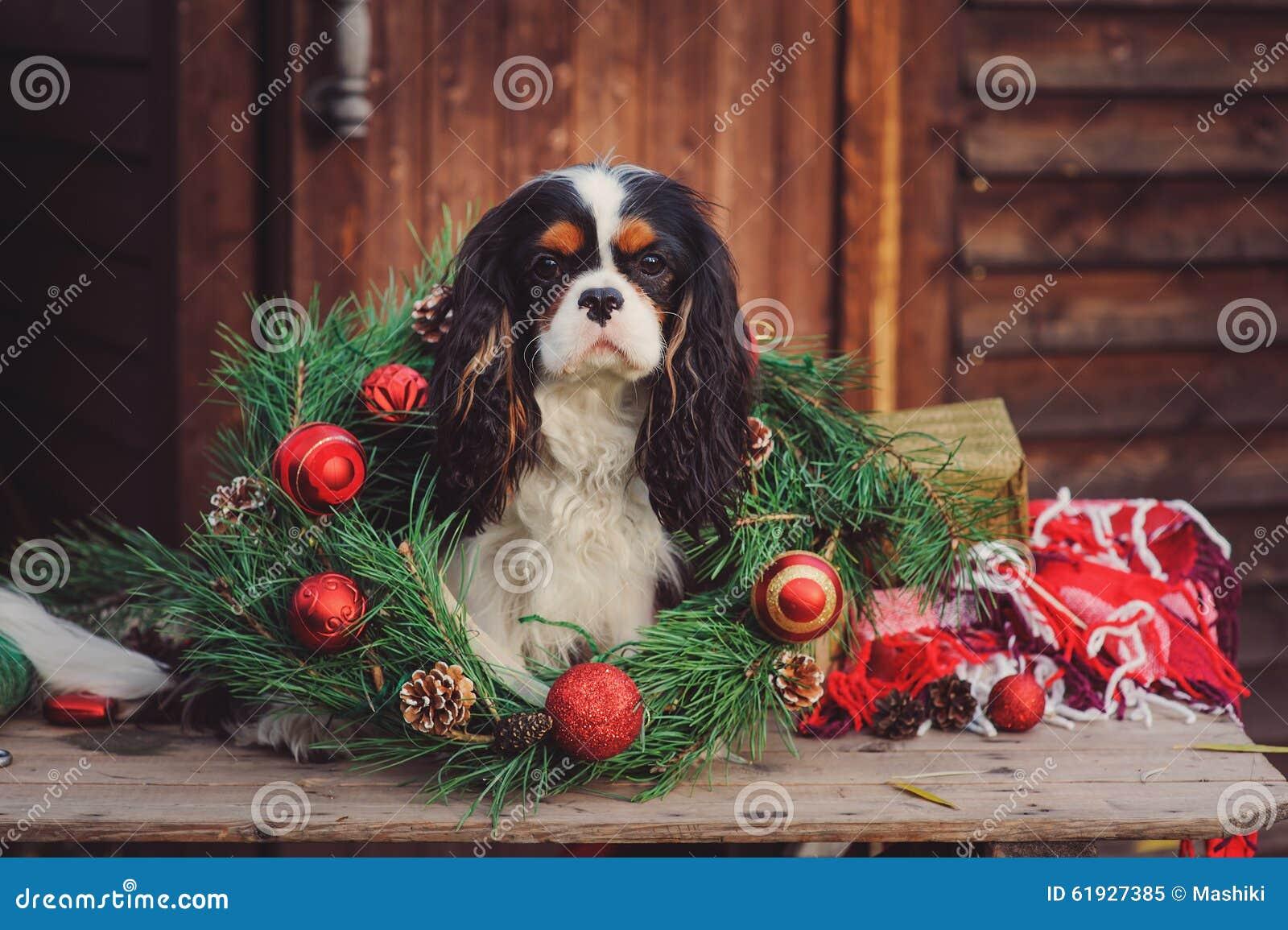 Black Fluffy Dog Christmas Cards