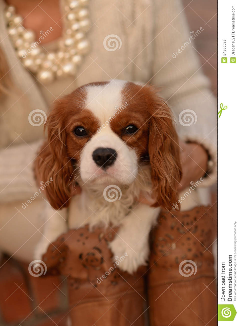 White Fluffy Dog With Brown Ears And Paws