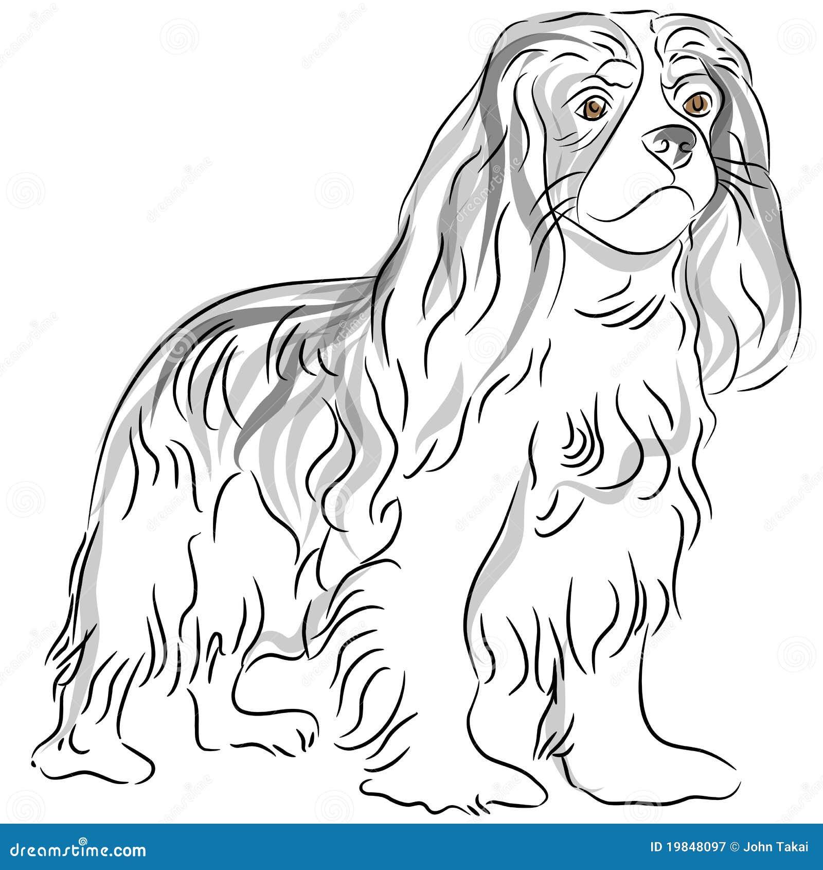 cavalier king charles spaniel drawing stock vector
