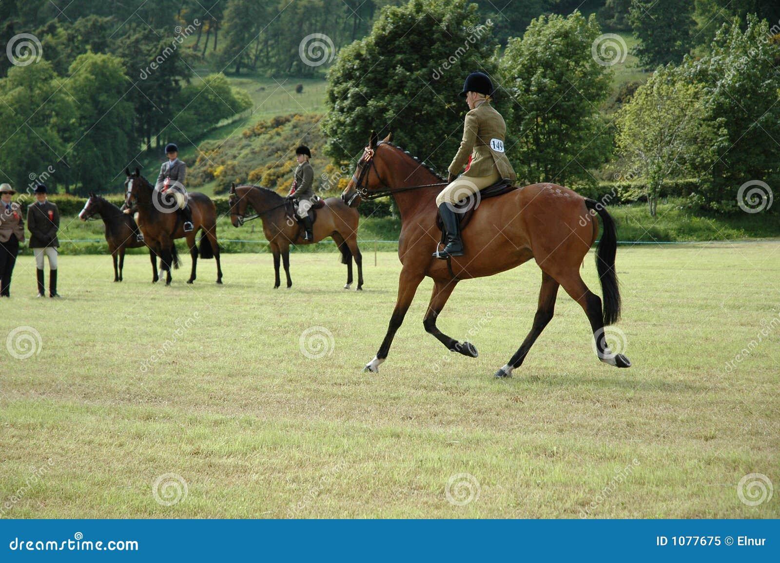 Cavalli alle prove di dressage