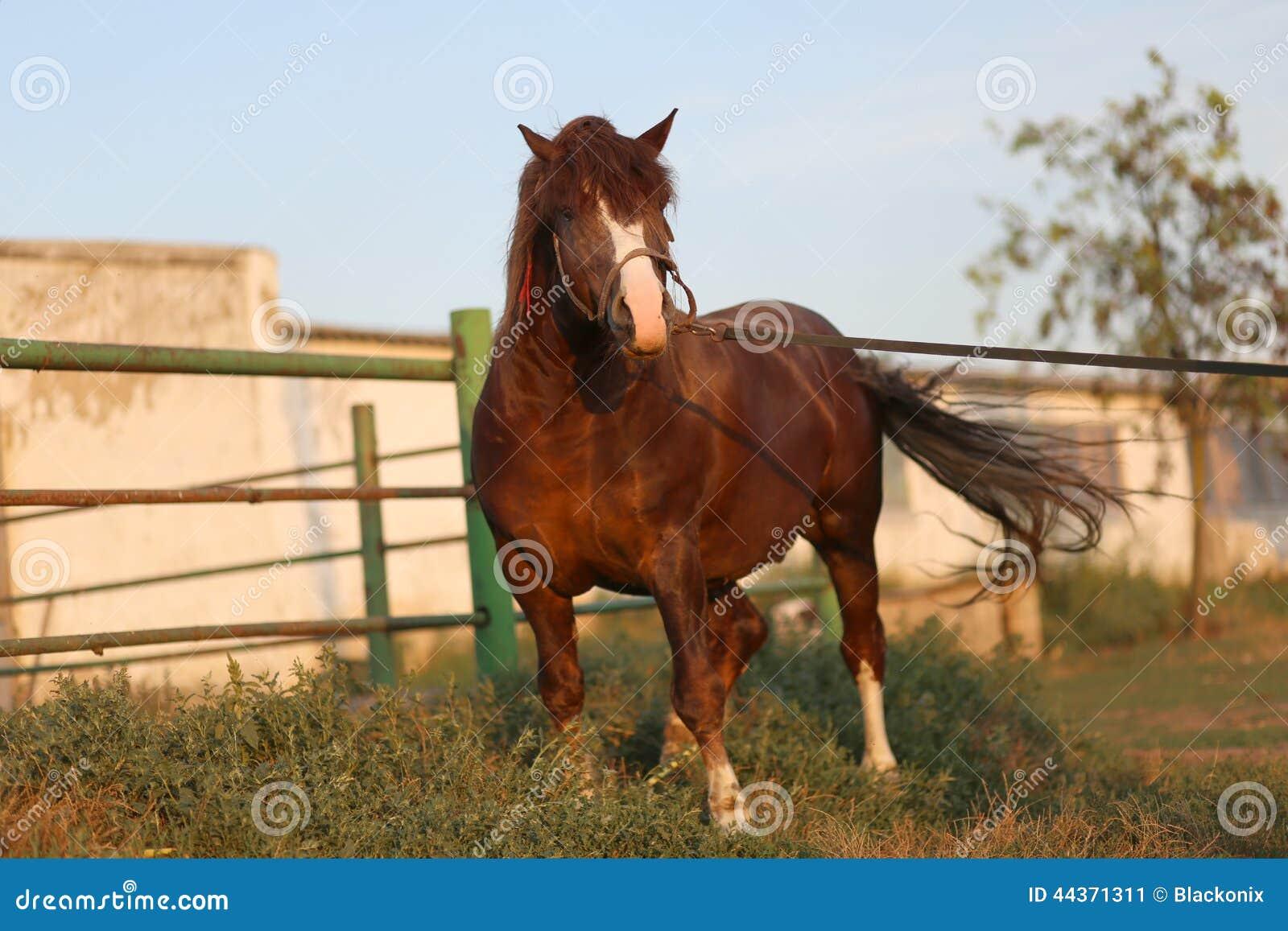 Cavalli che esaminano la macchina fotografica