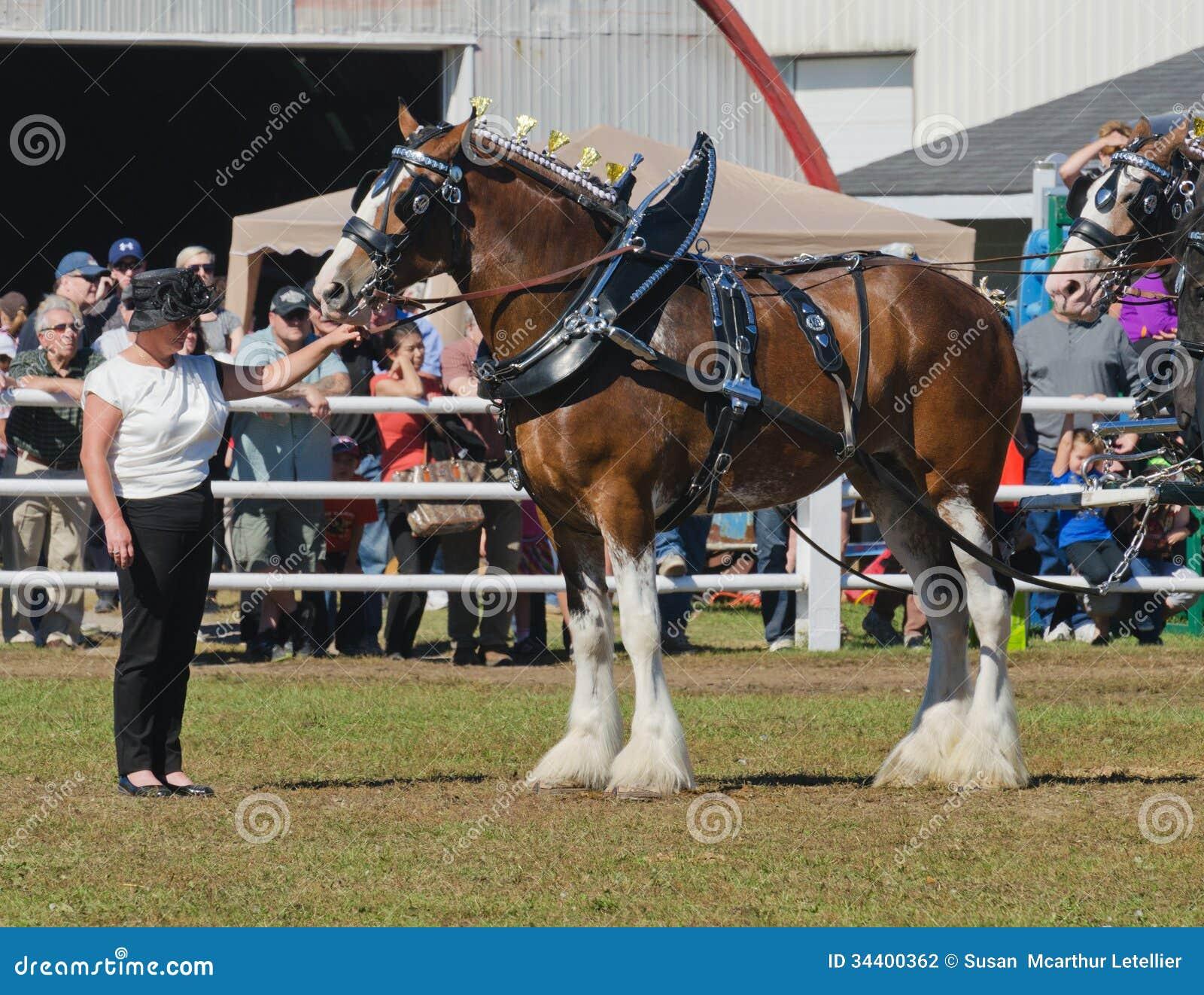 Cavallo agricolo italiano