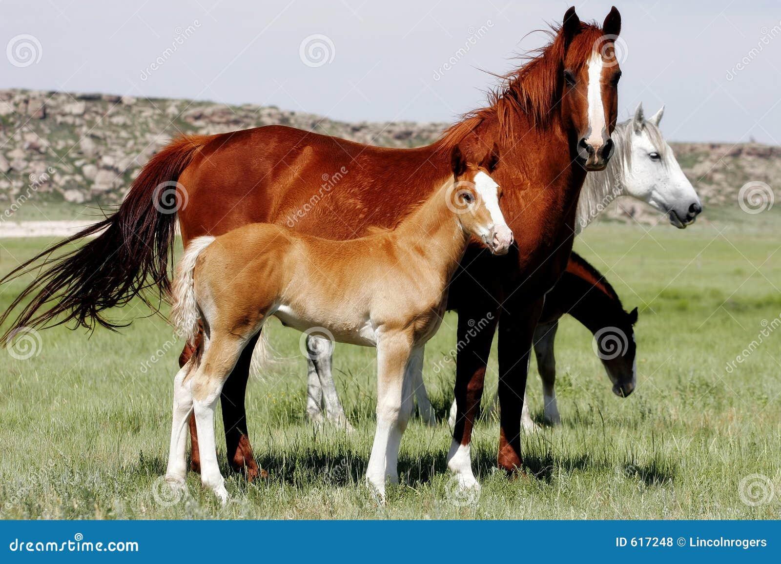 Cavalli del bambino con le madri