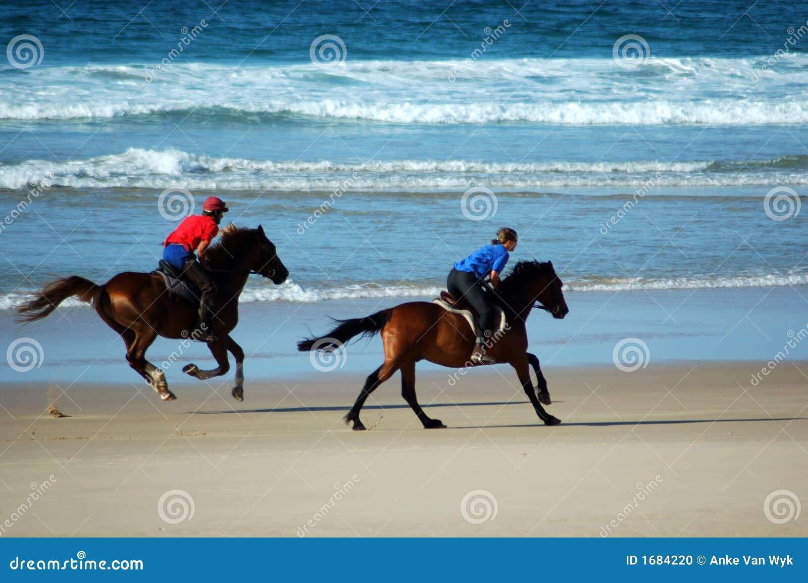 Cavalli della spiaggia