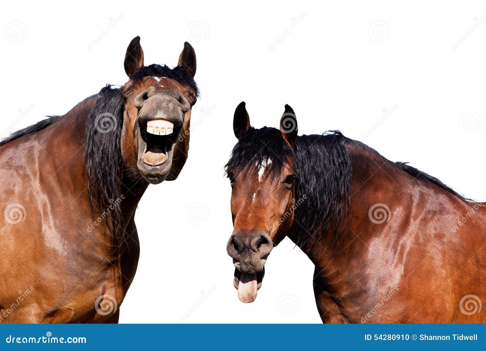 Cavalli di risata