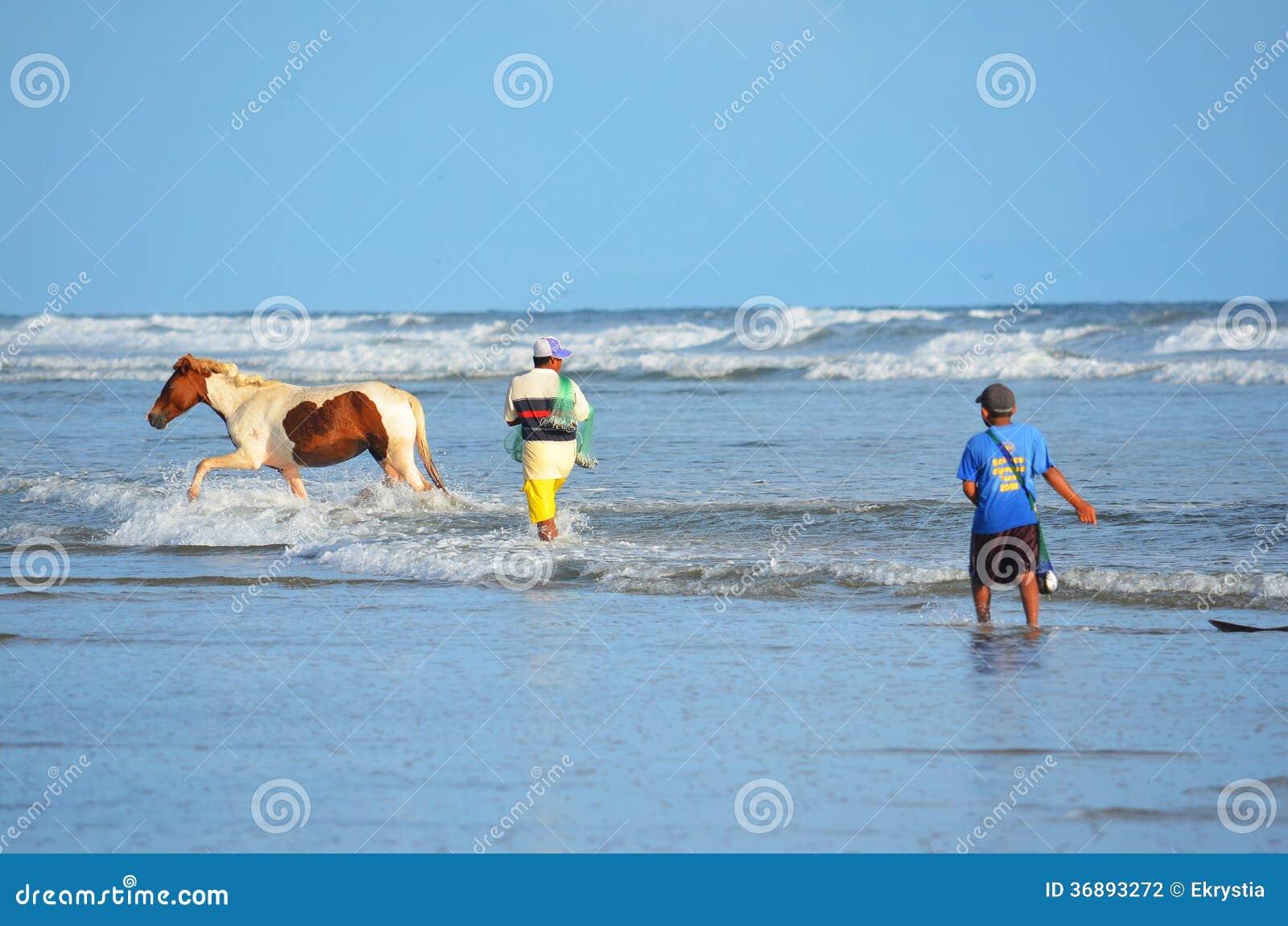 Download Cavalli E Pescatori, EL Espino Di Playa Fotografia Editoriale - Immagine di campagna, attività: 36893272