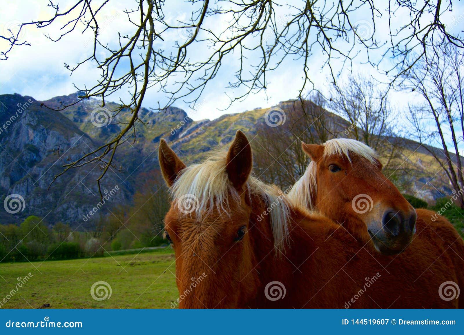 Cavalli nell amore