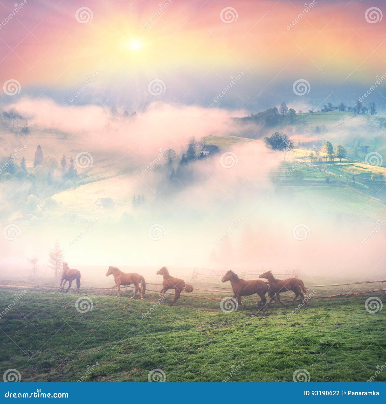 Cavalli nella nebbia all alba