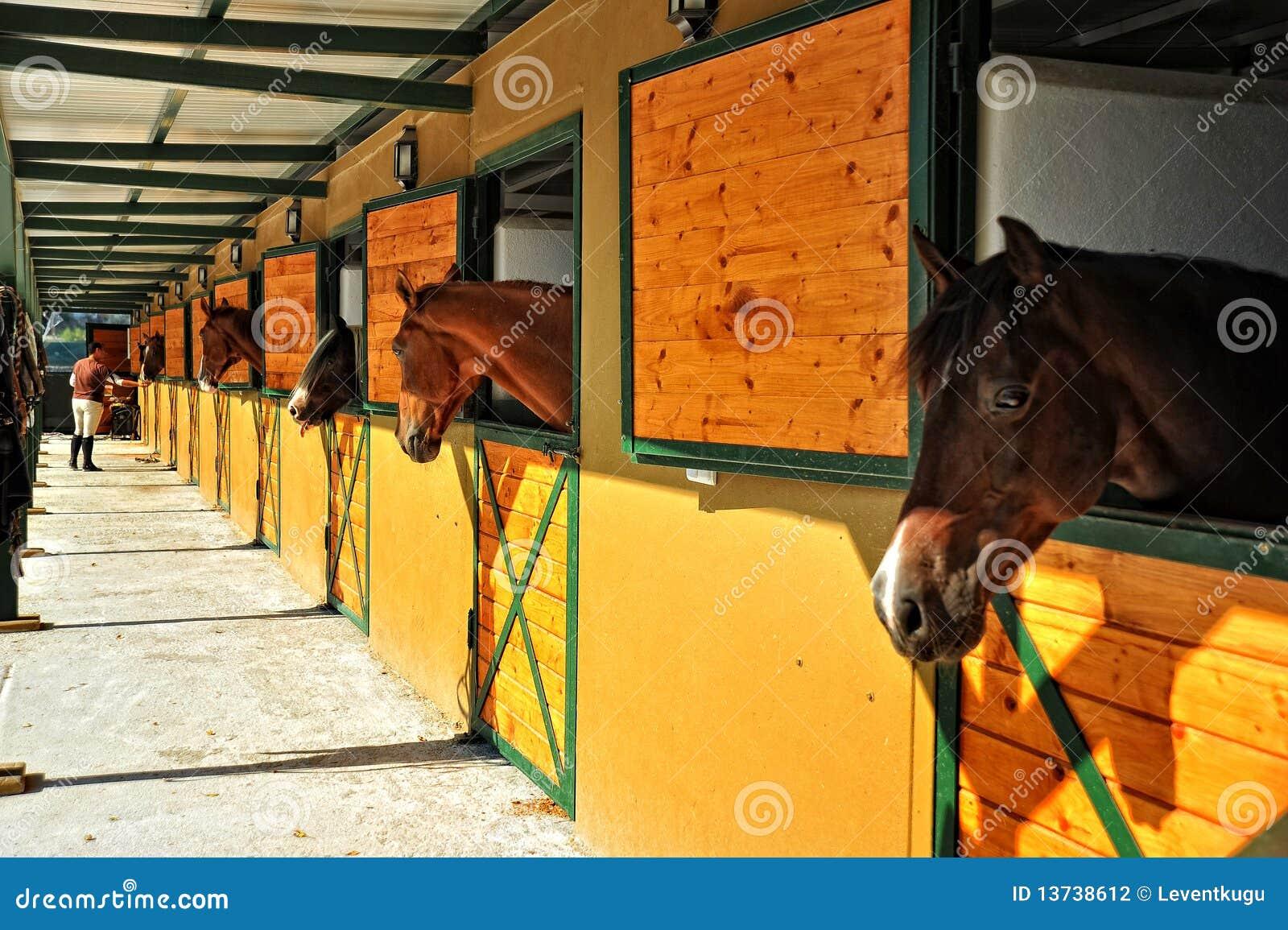 Cavalli nelle scuderie