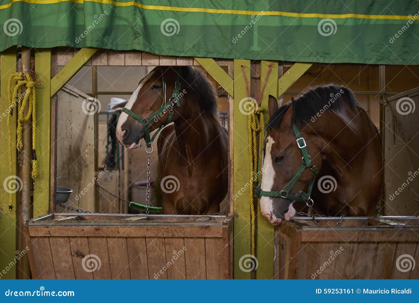 Cavalli nelle stalle