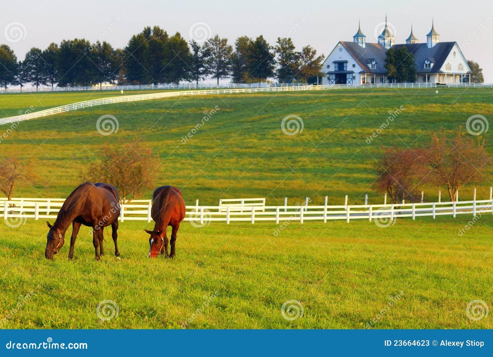 Cavalli sull azienda agricola