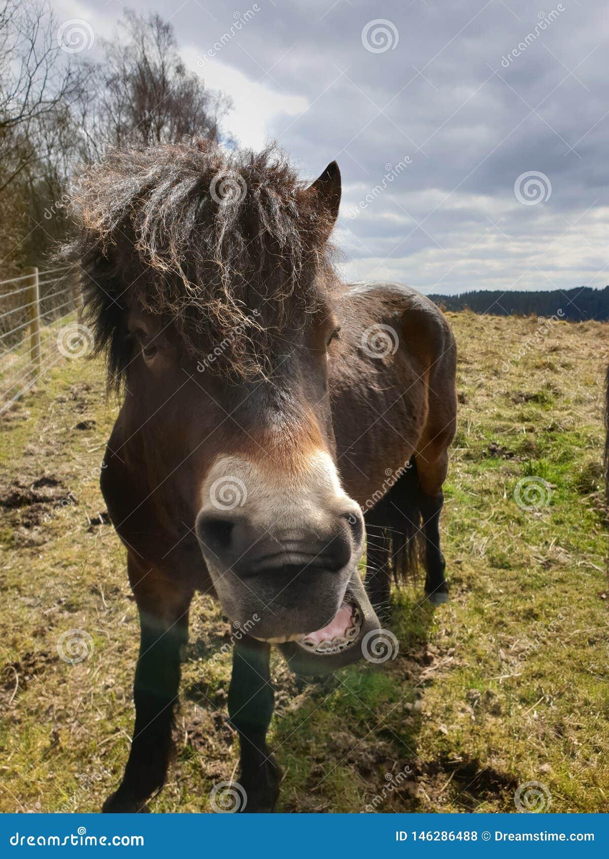 Cavallino, bello animale