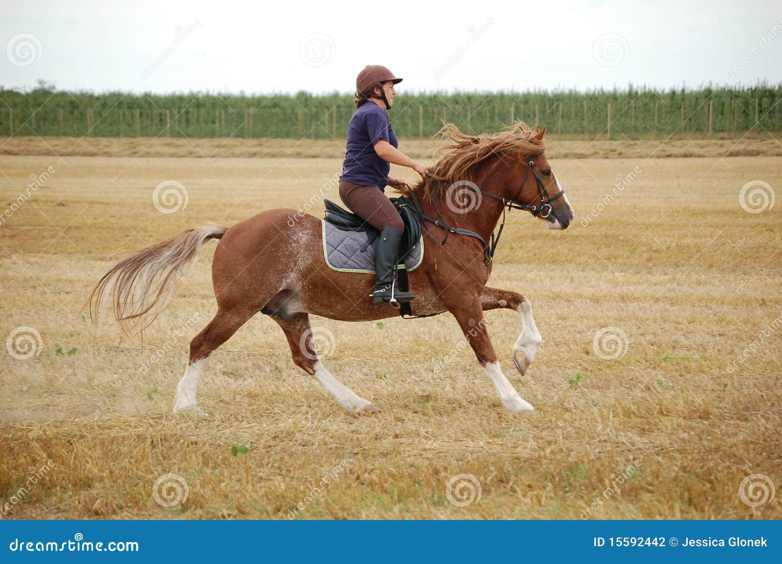 Cavallino della pannocchia di Lingua gallese