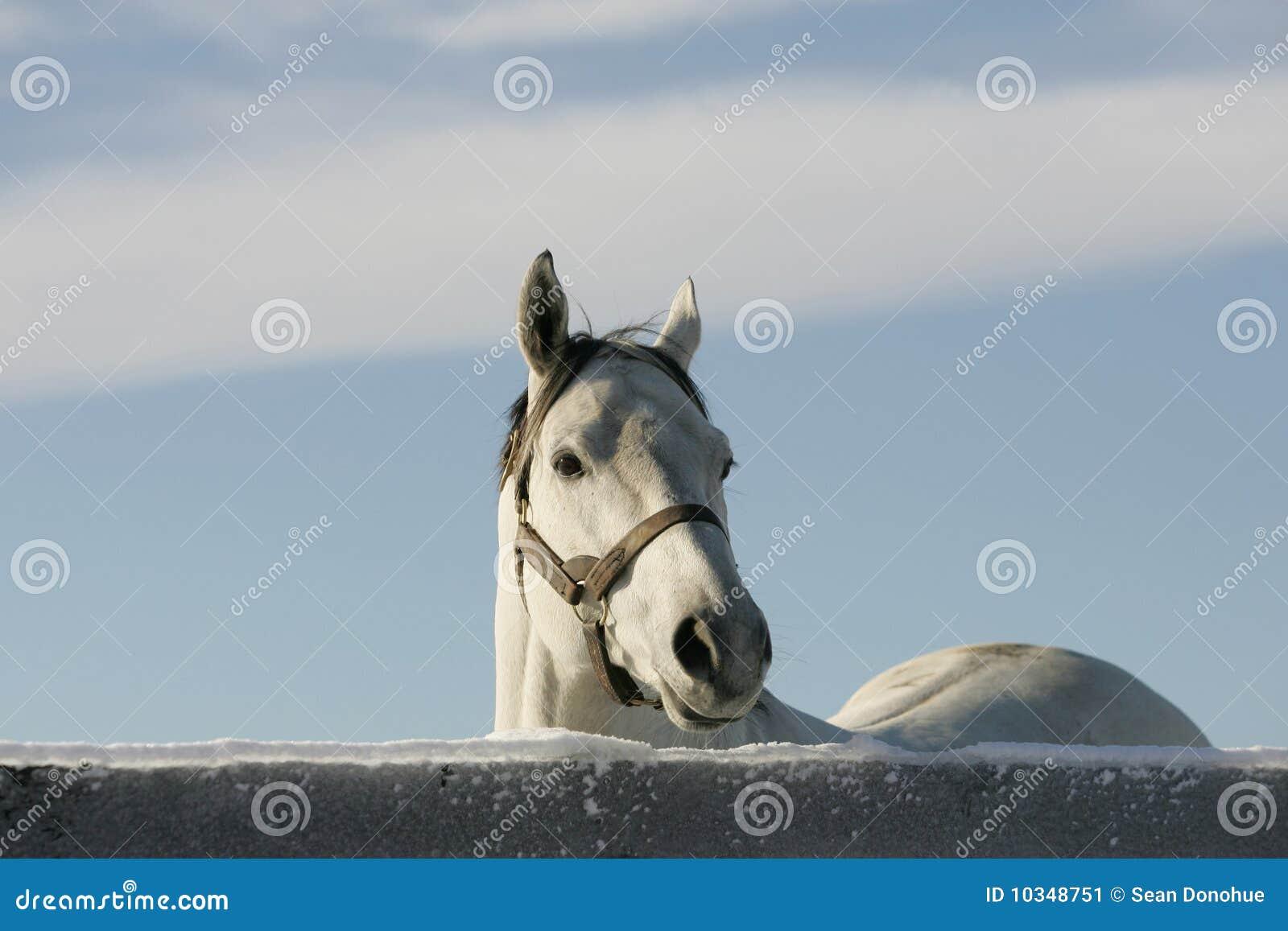 Cavallo 3 dell azienda agricola