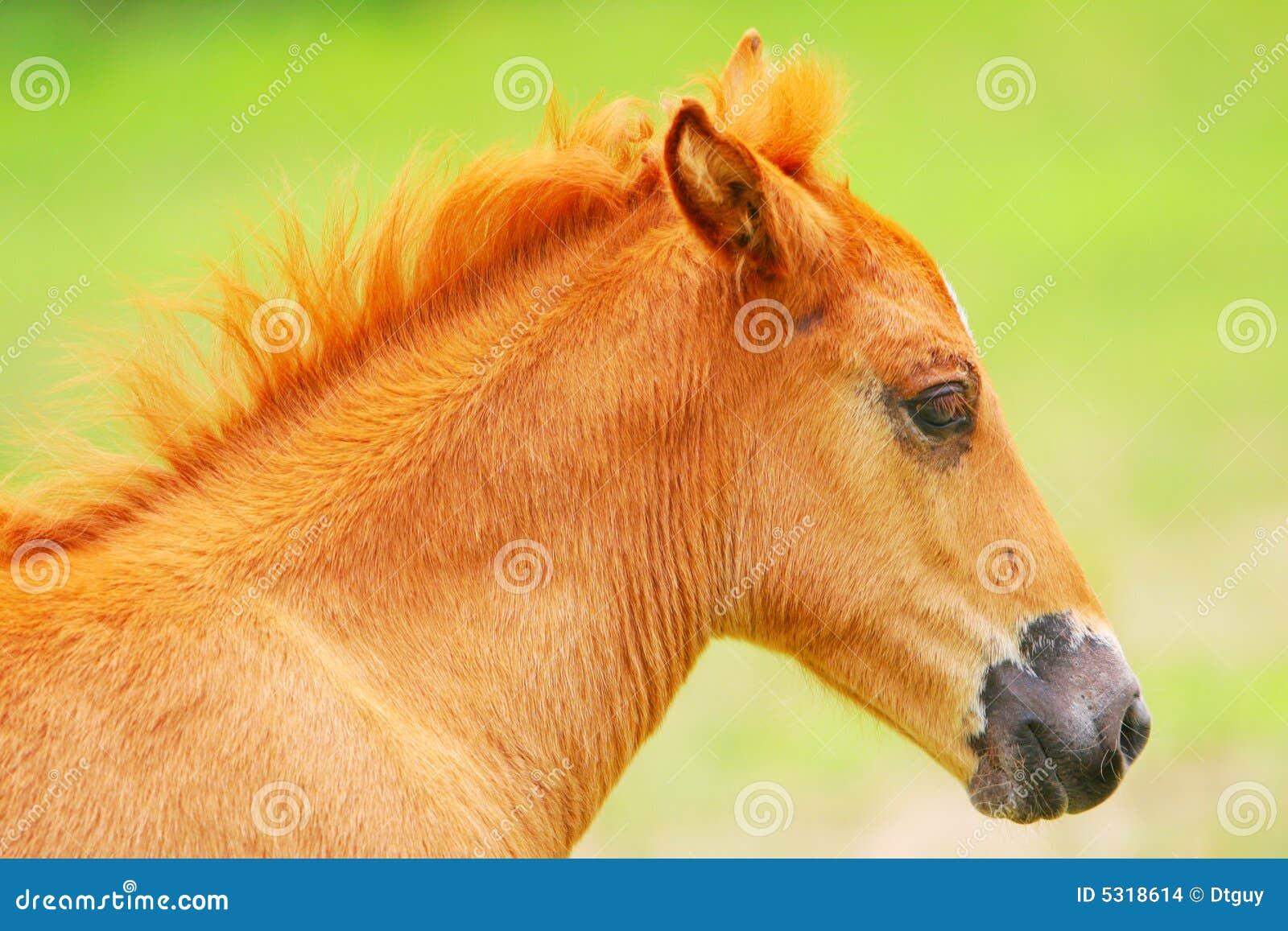 Download Cavallo fotografia stock. Immagine di background, cavallo - 5318614