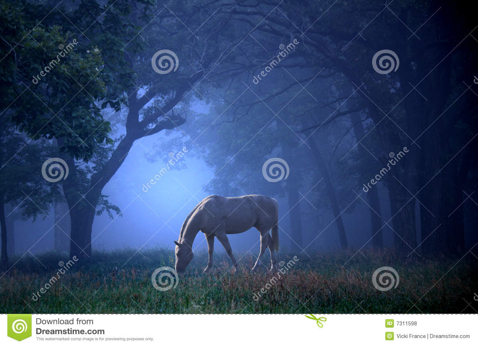 Cavallo bianco nella foschia blu