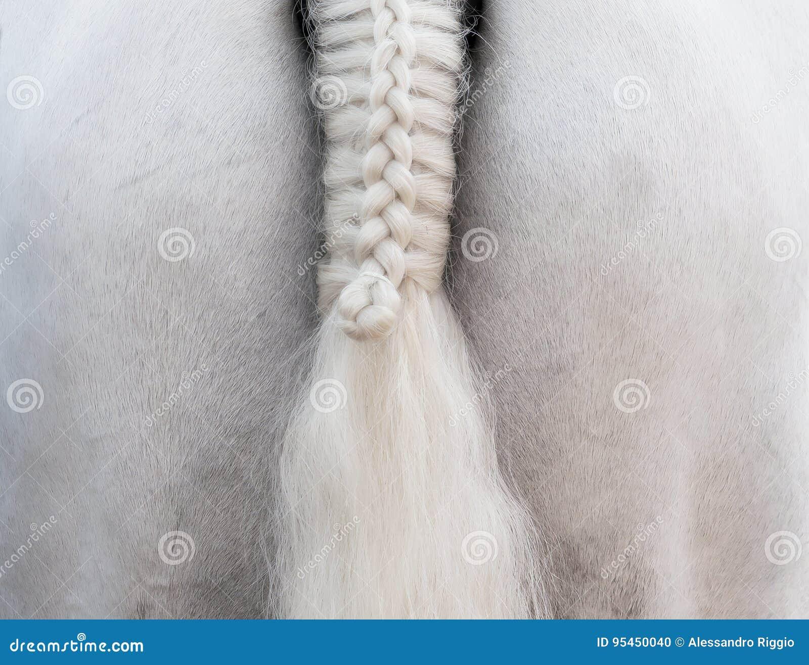 Cavallo bianco: una coda della treccia