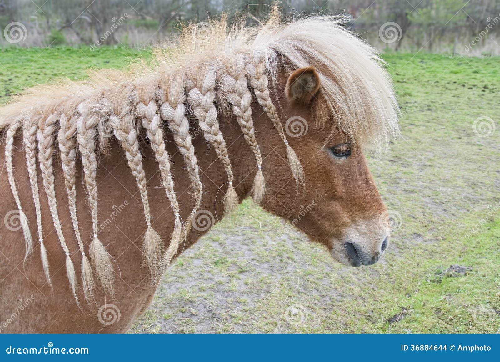 Download Cavallo con le trecce fotografia stock. Immagine di treccia - 36884644
