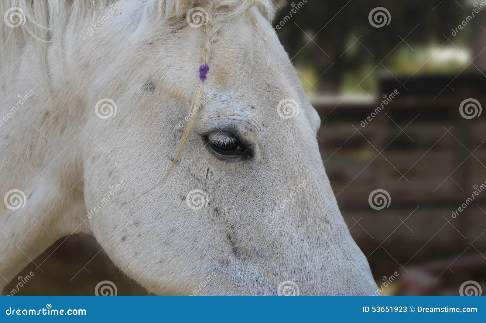 Cavallo con una treccia
