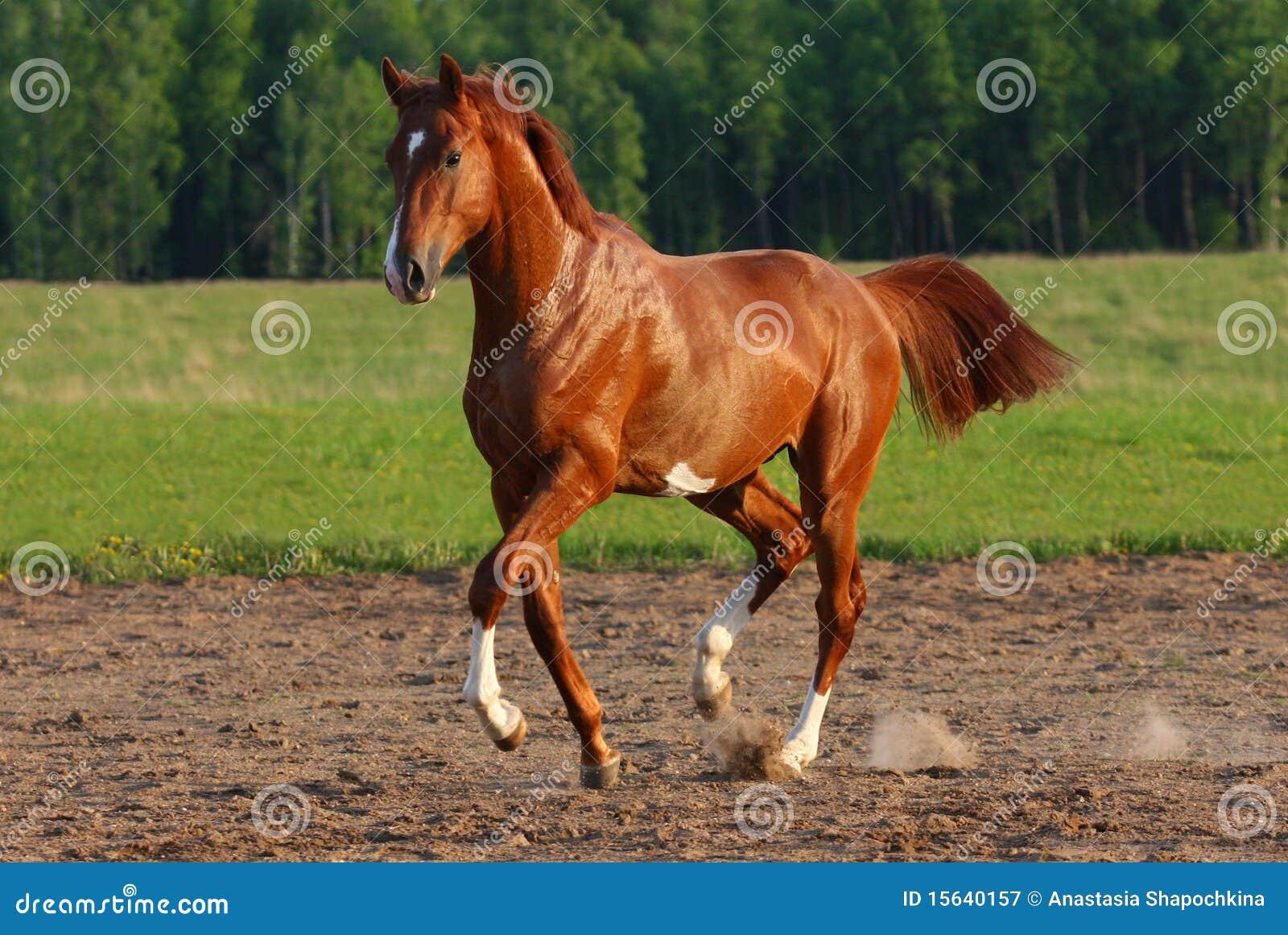 Cavallo del passaggio
