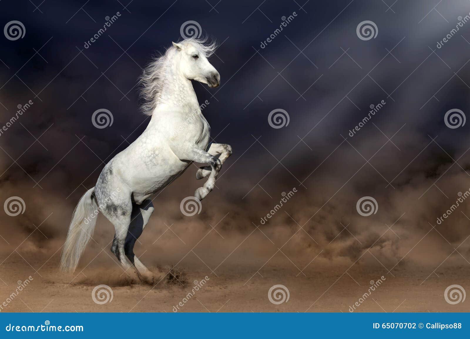 Cavallo in deserto