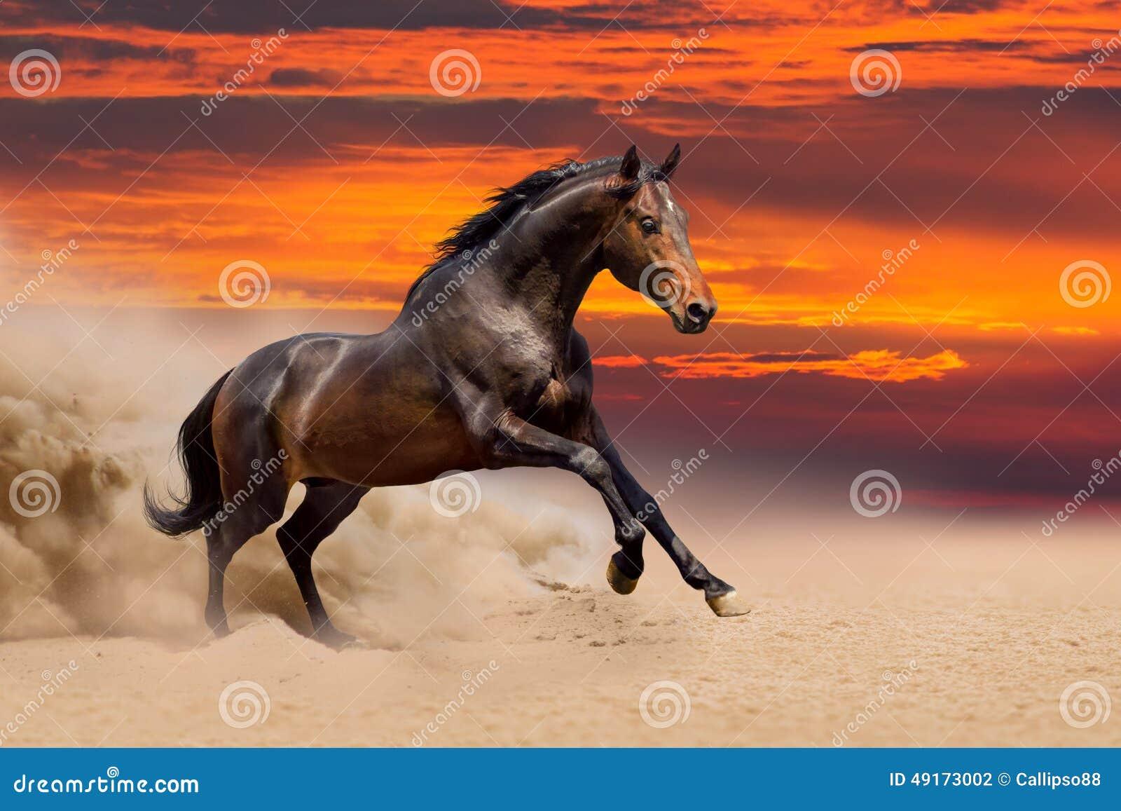 Cavallo di baia fatto funzionare in deserto