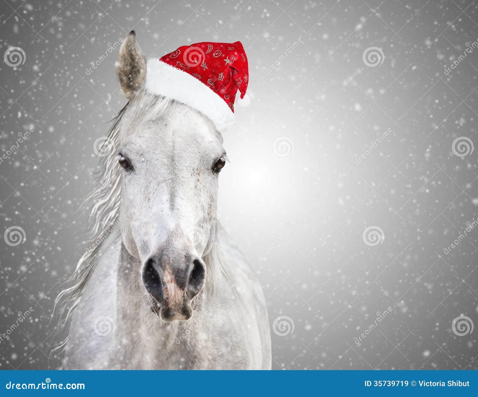 Immagini Di Natale Con Cavalli.Cavallo Di Natale Bianco Con Il Cappello Di Santa Sulle