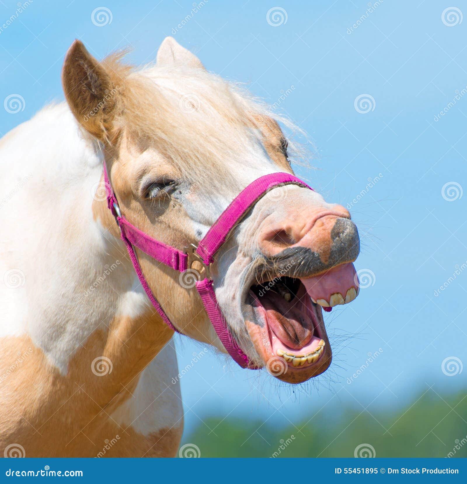 nitrito cavallo da
