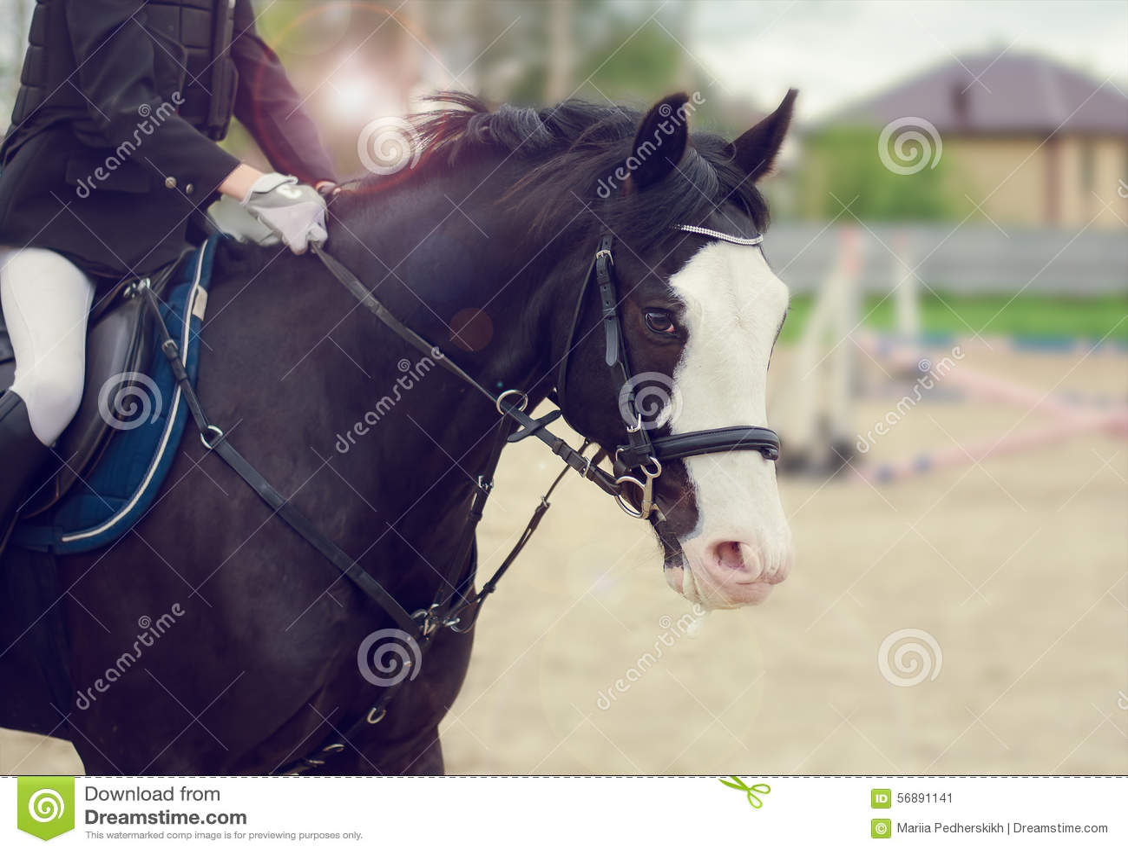 Cavallo di salto