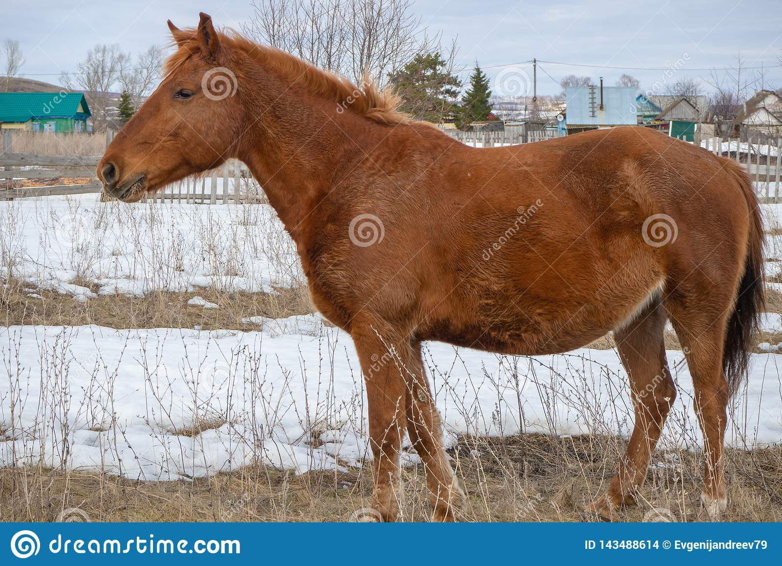 Cavallo diritto isolato