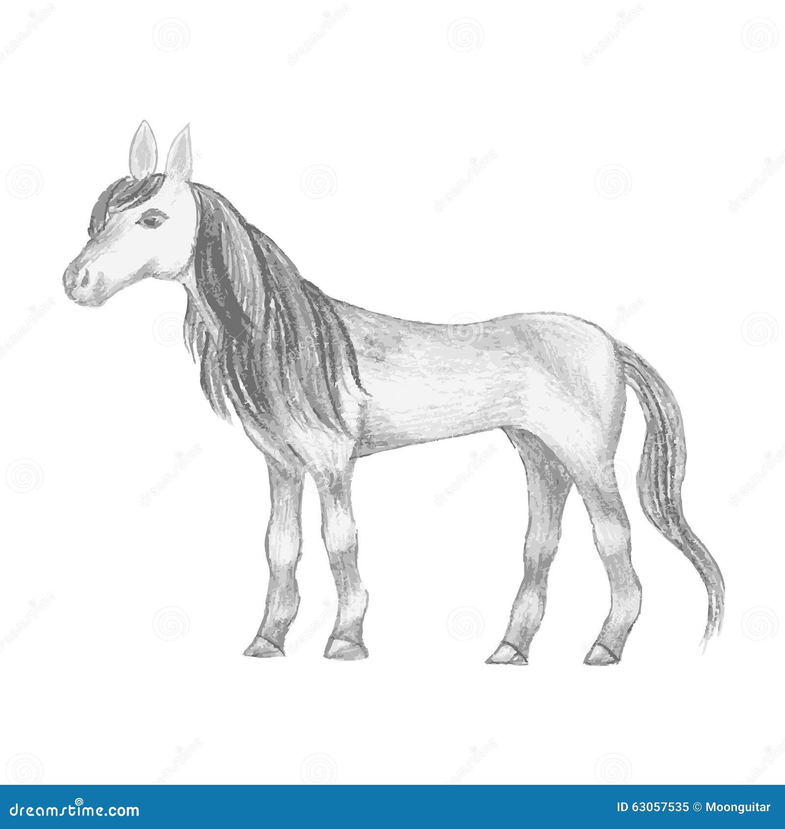 Cavallo Disegnato A Mano Disegno A Matita Della Giumenta