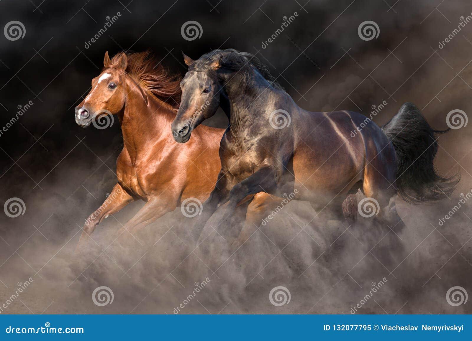 Cavallo due nella tempesta di deserto