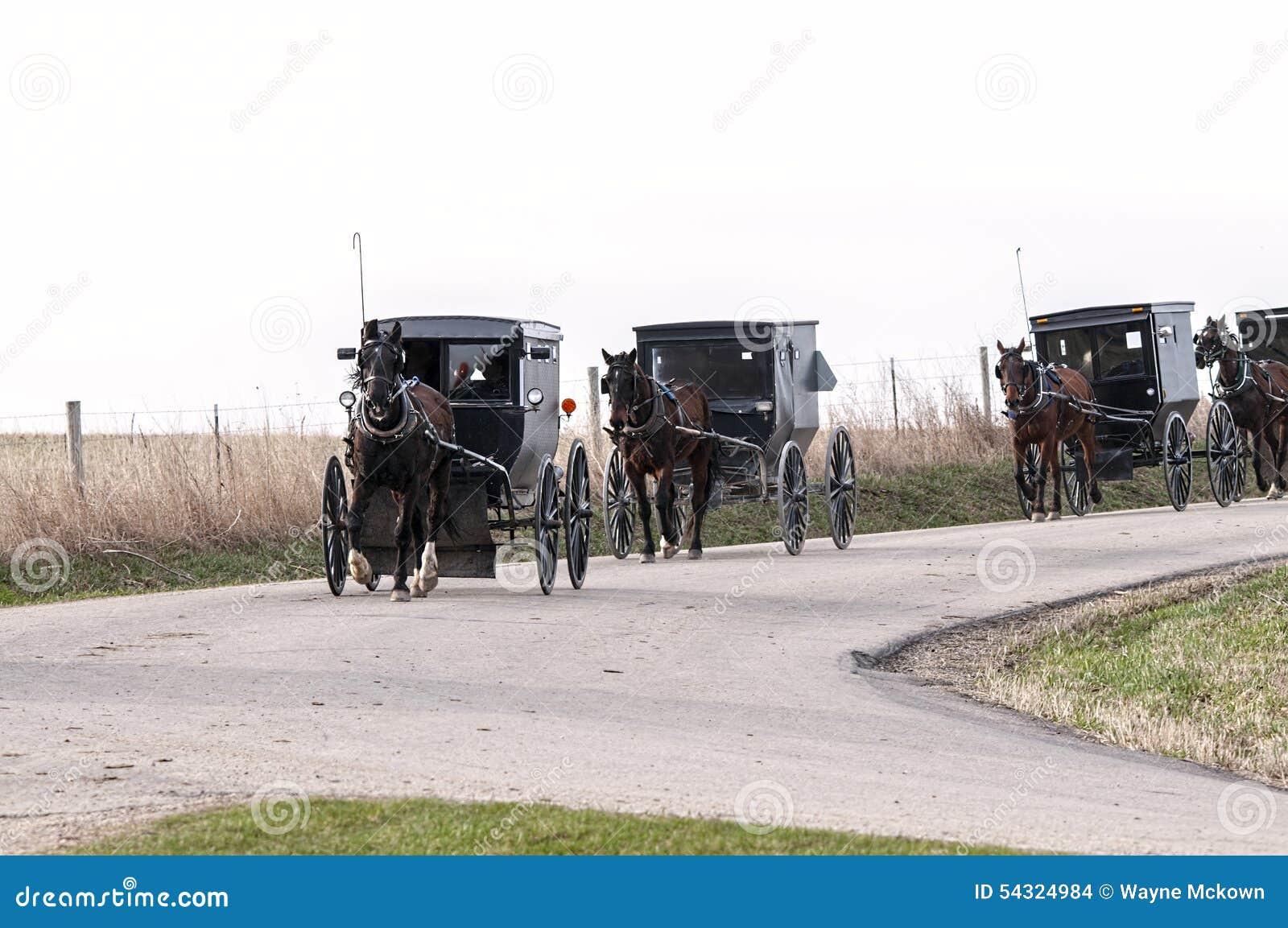 Cavallo e buggys di Amish