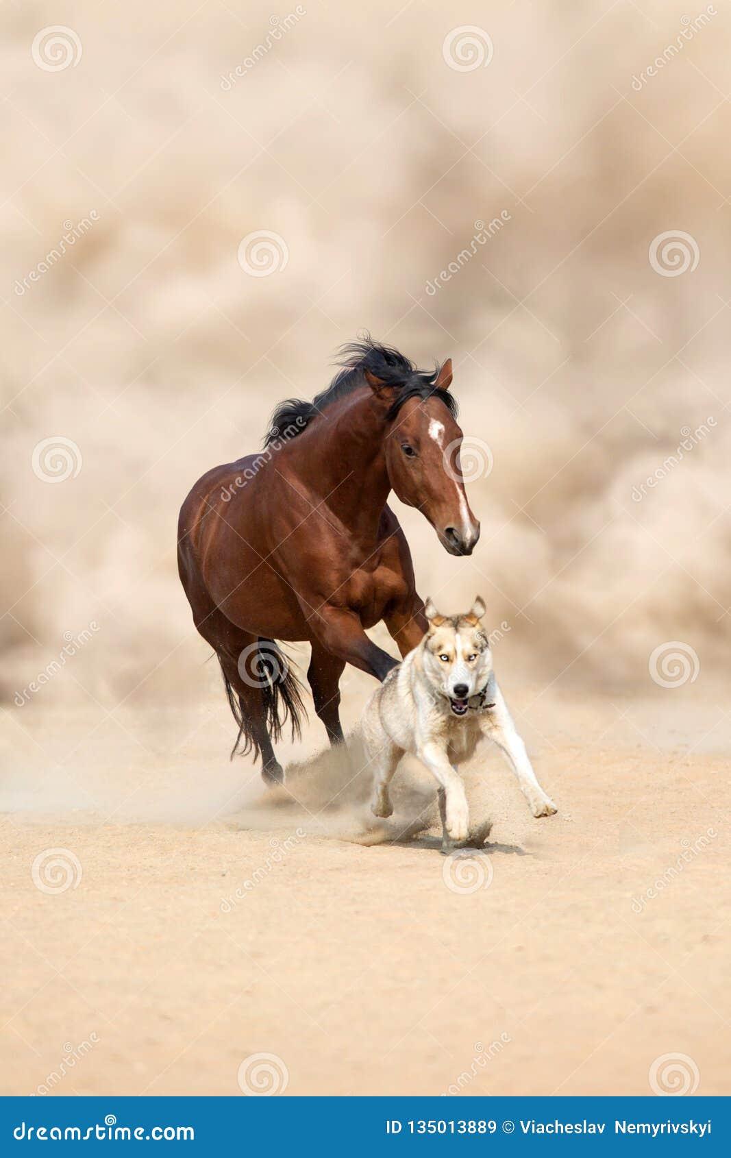 Cavallo e cane in deserto