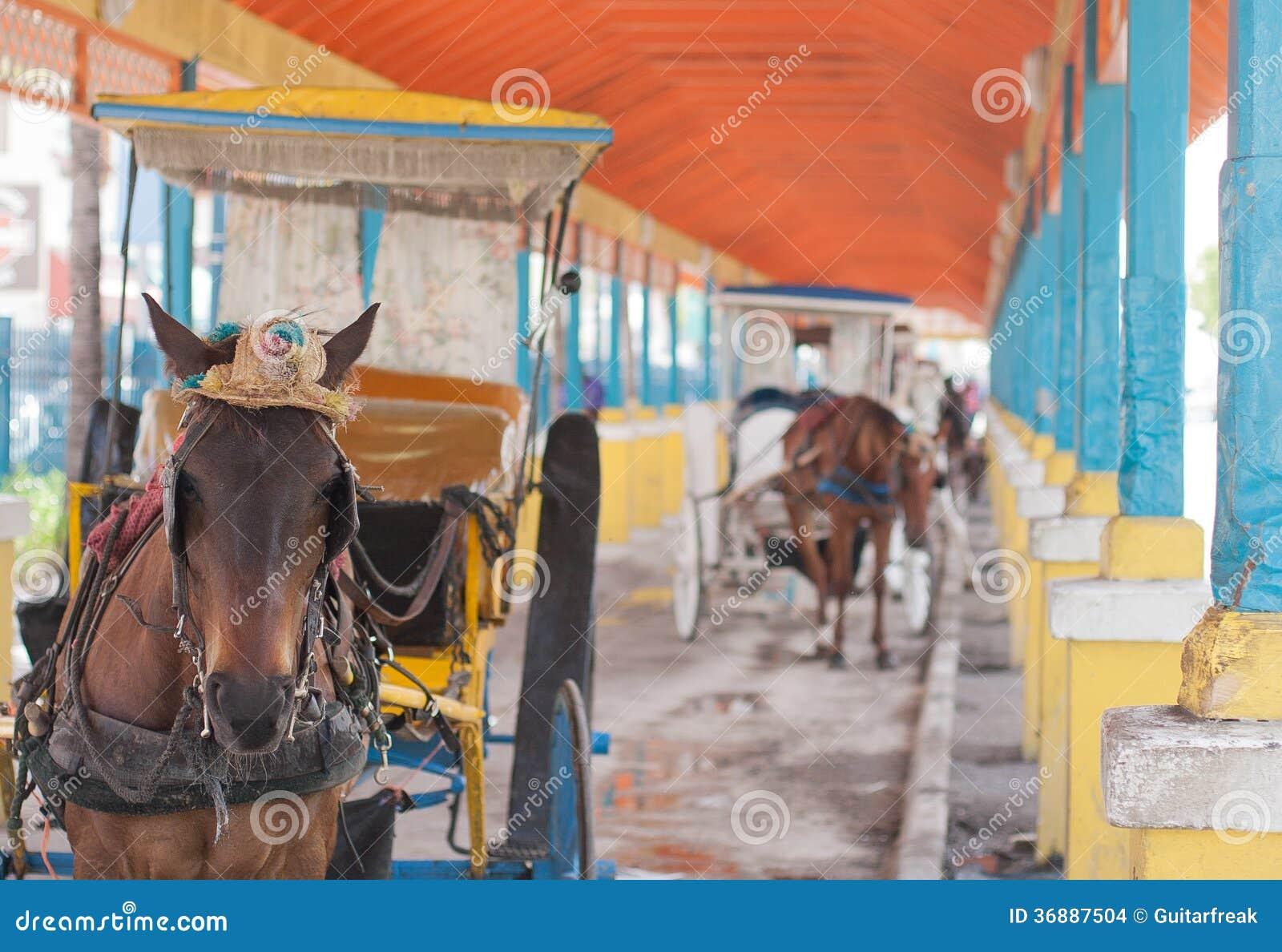 Download Cavallo E Carrozzino Caraibici Fotografia Stock - Immagine di vuoto, colorful: 36887504