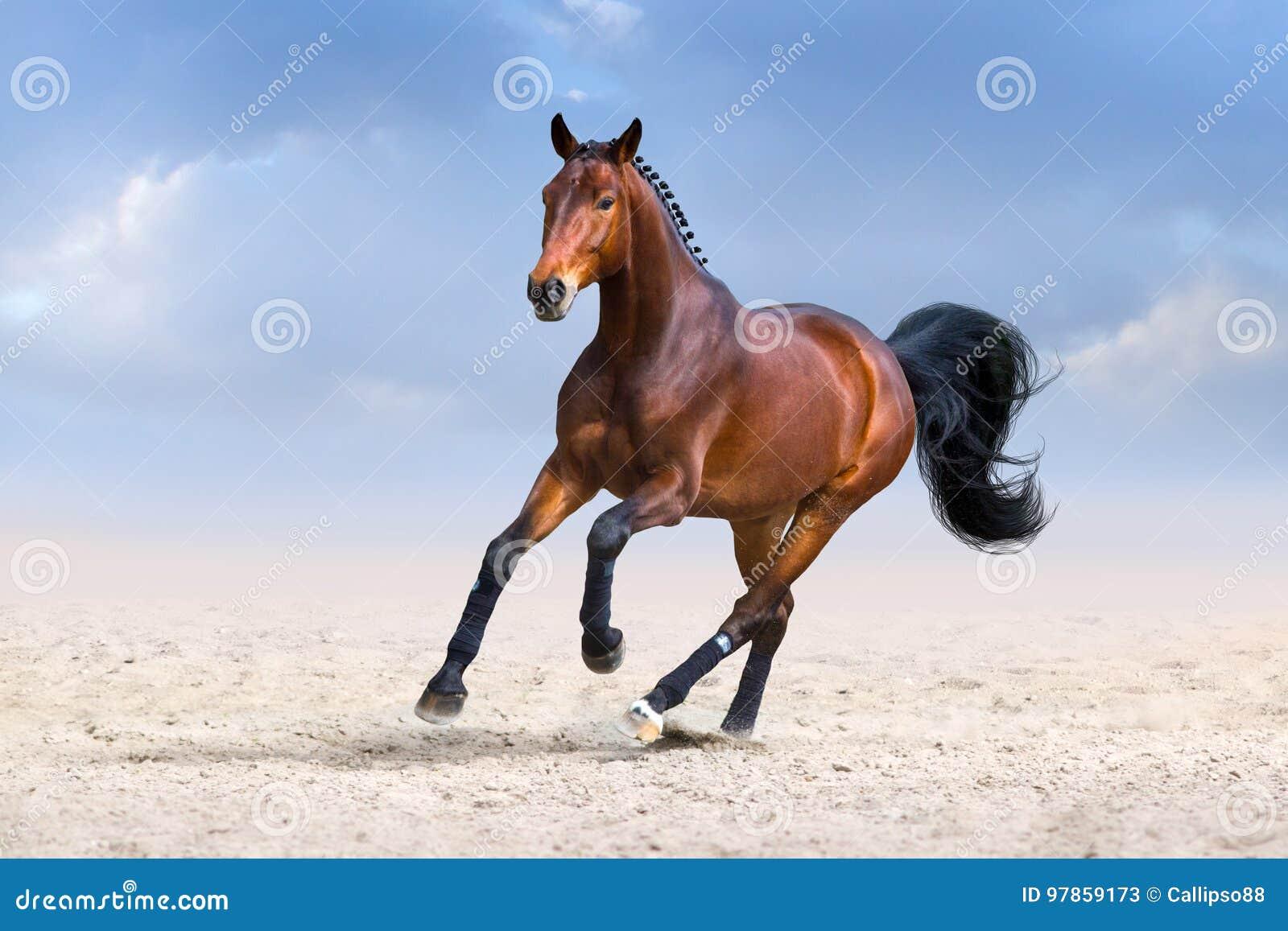 Cavallo nel moto