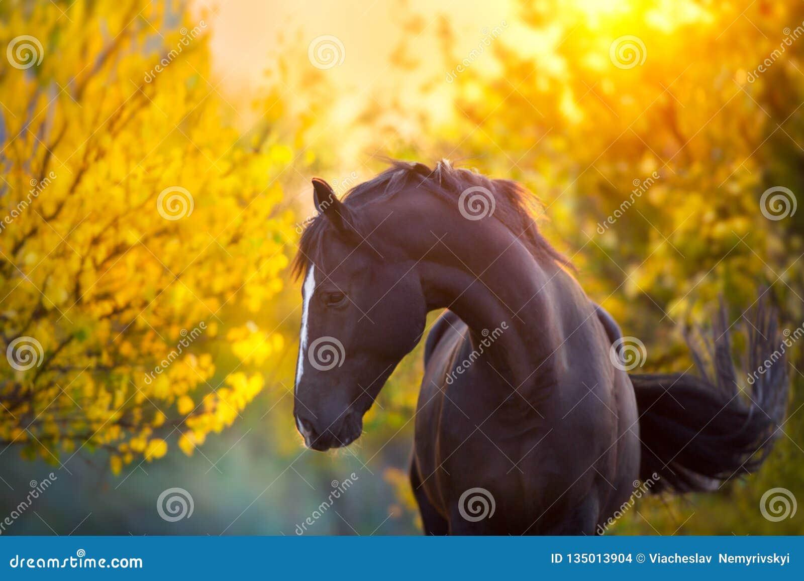Cavallo nella caduta