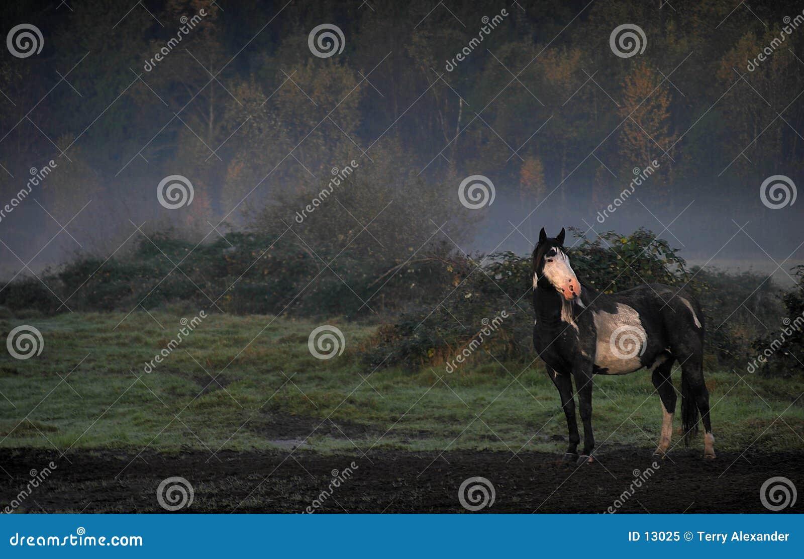 Cavallo nella foschia