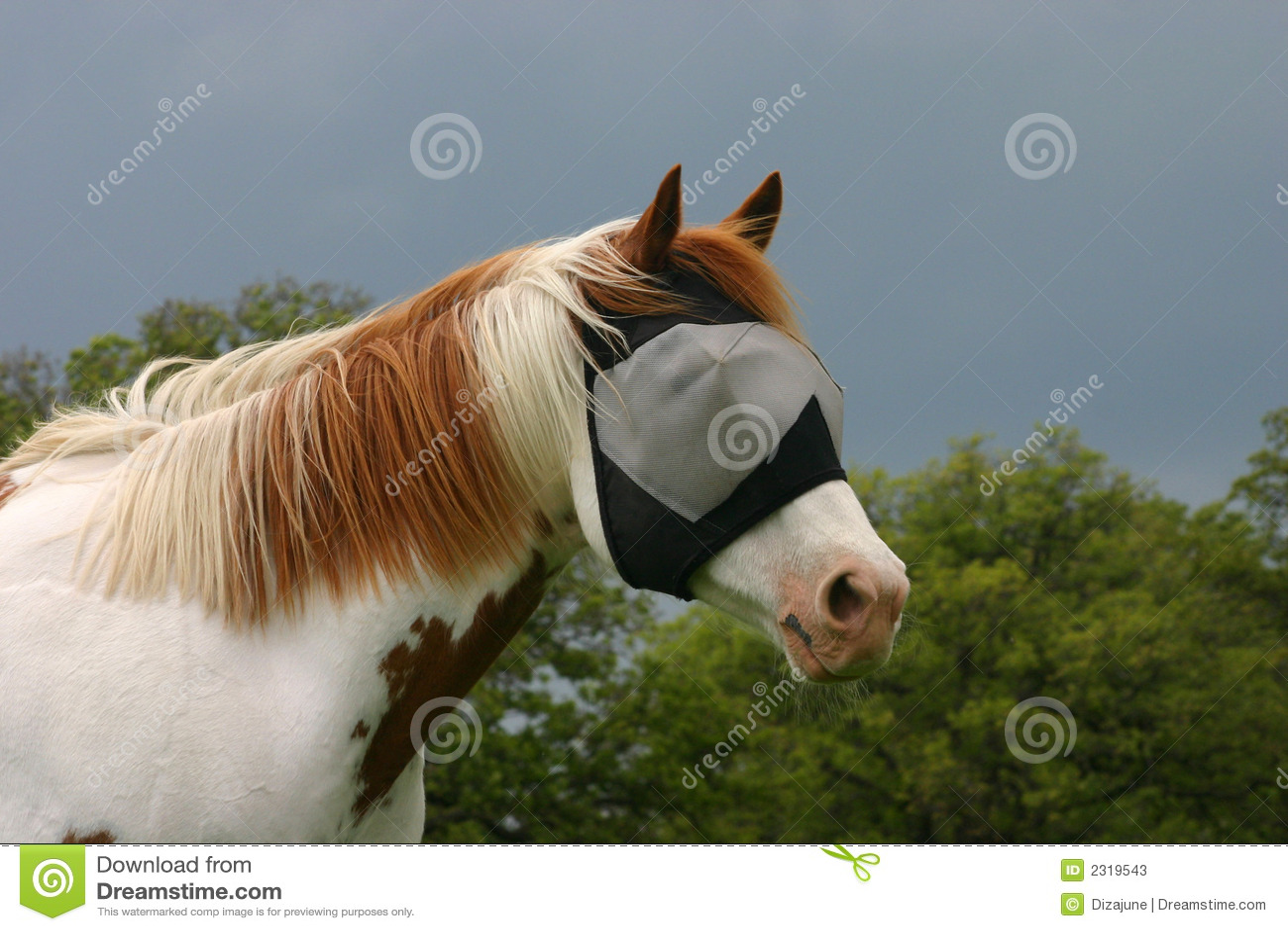 Cavallo nella mascherina della mosca