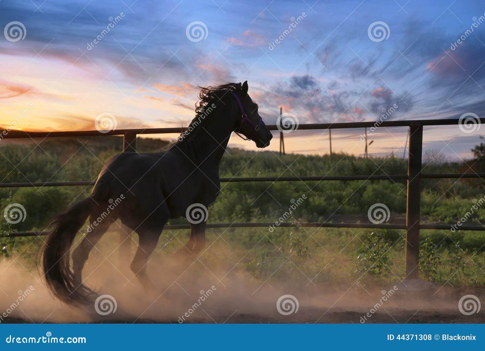 Cavallo nella polvere