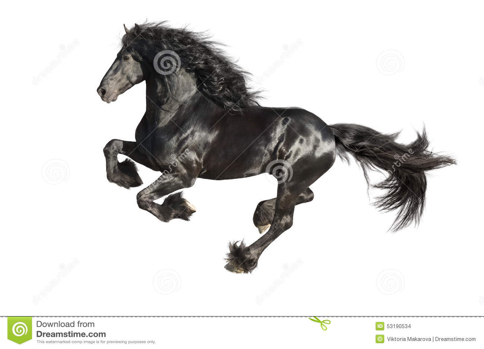 Cavallo nero frisone di galoppo corrente isolato sul for Cavallo disegno a matita