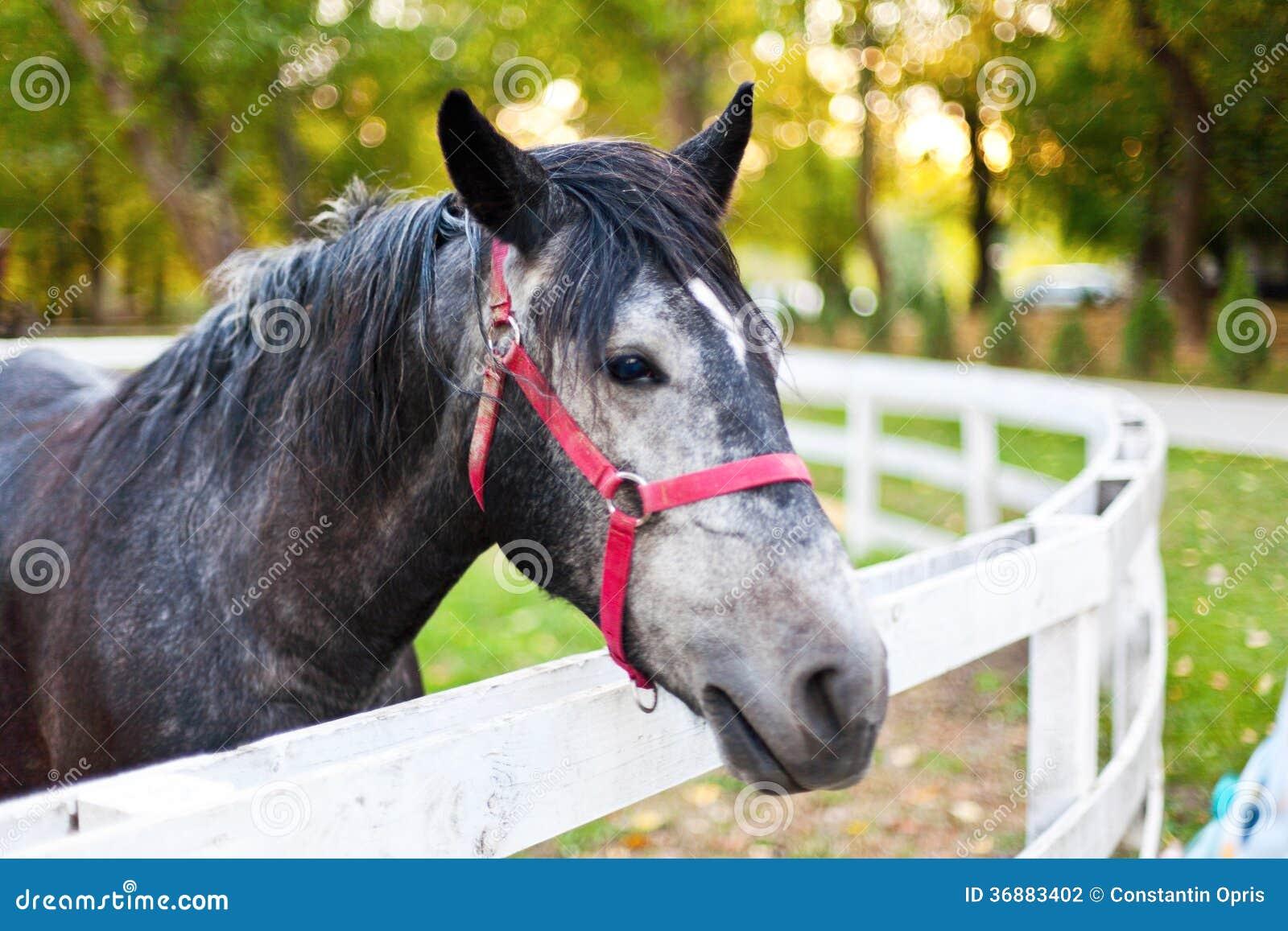 Download Cavallo in penna fotografia stock. Immagine di parco - 36883402